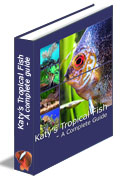 how to care tropical fish & tropical fish care guide